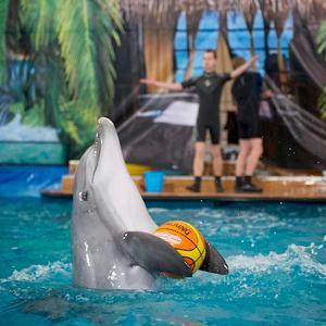 Дельфинарии, океанариумы Черноголовки