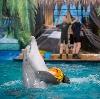 Дельфинарии, океанариумы в Черноголовке