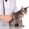 Ветеринарные клиники в Черноголовке